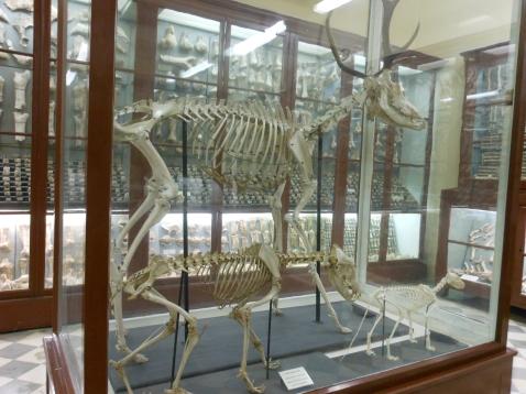 DSCN4360dalam deers